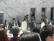 旭山 ペンギン 1 縮小