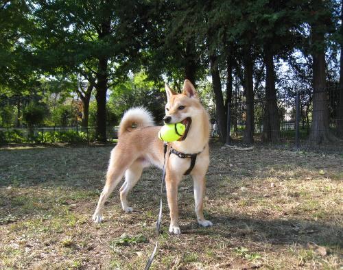 20111124ichimai.jpg