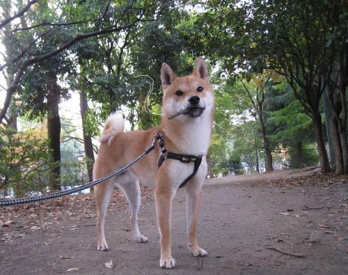 20111129ichimai001.jpg