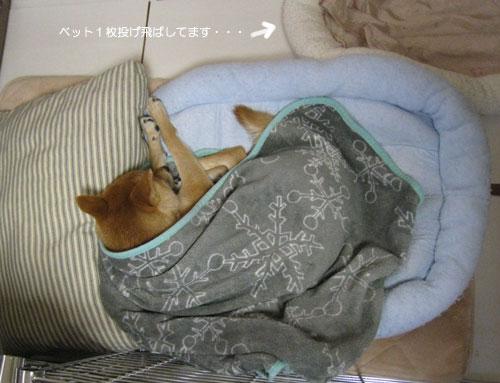 20111214ichimai.jpg