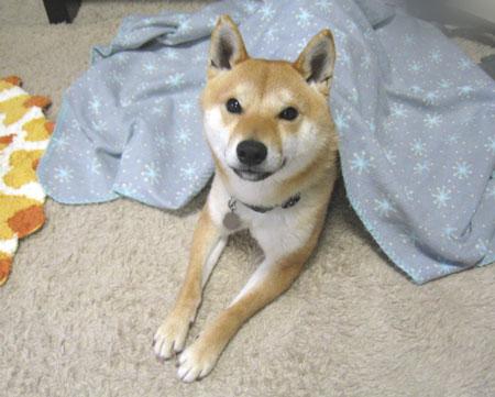 20120323ichimai001.jpg