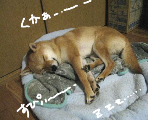 taichimai-2.jpg