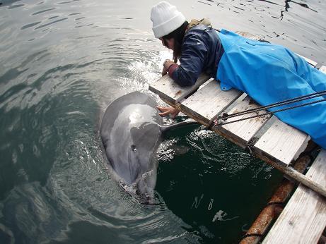 イルカと飼育員さん