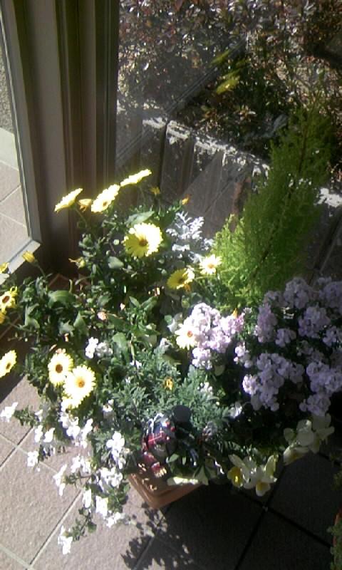 100218_121744病院の花