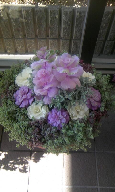 100218_121757病院の花