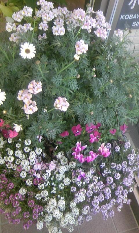 100218_121814病院の花