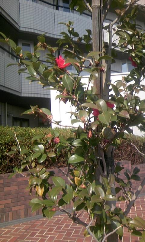 100222_121645市大病院の庭園