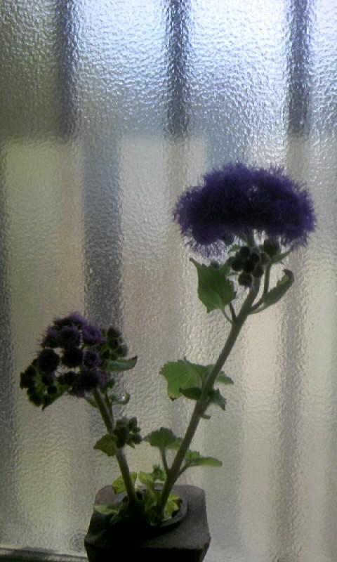 ?100322_100730青い花