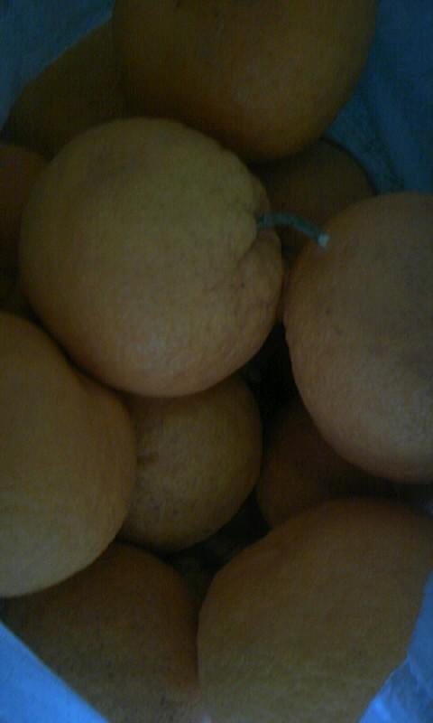 100501_125407柑橘