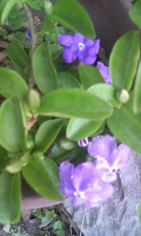 100515_164420香りバンマツリ