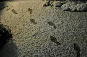 0201初雪3