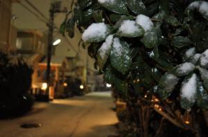 0201初雪4