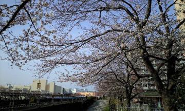 3月30日の桜他 004