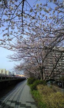 3月30日の桜他 003