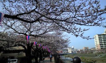 3月30日の桜他 002