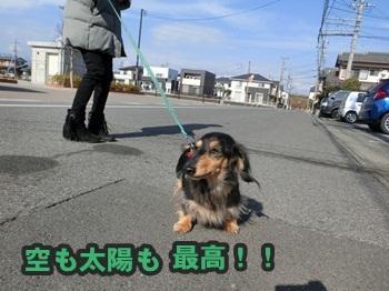 久々散歩022