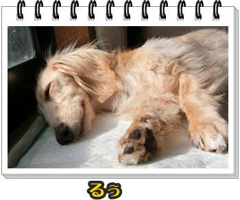 お昼寝バインダー028