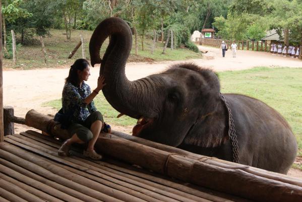 象の孤児院18