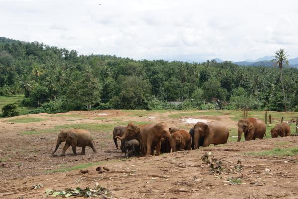 象の孤児院1