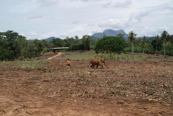 象の孤児院2
