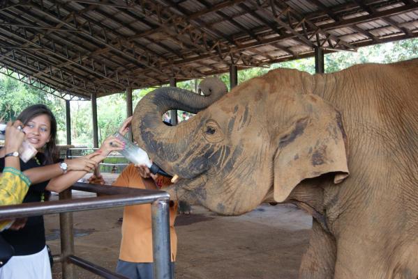 象の孤児院3