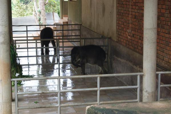象の孤児院4