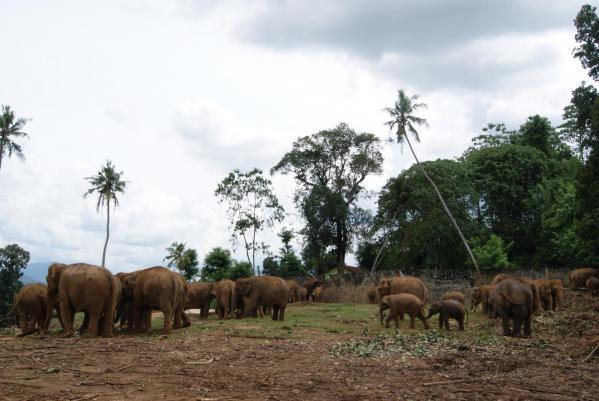 象の孤児院5