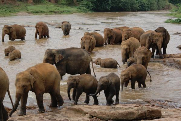 象の孤児院8