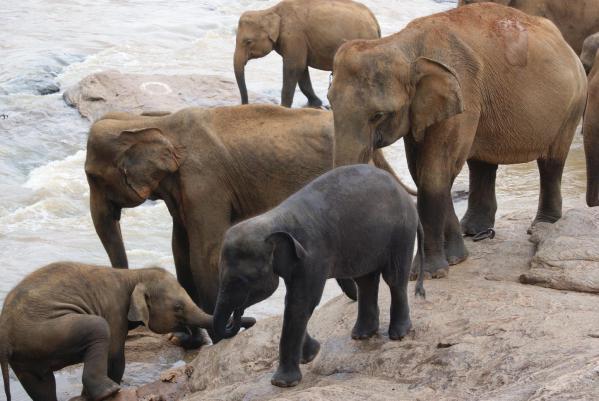 象の孤児院10