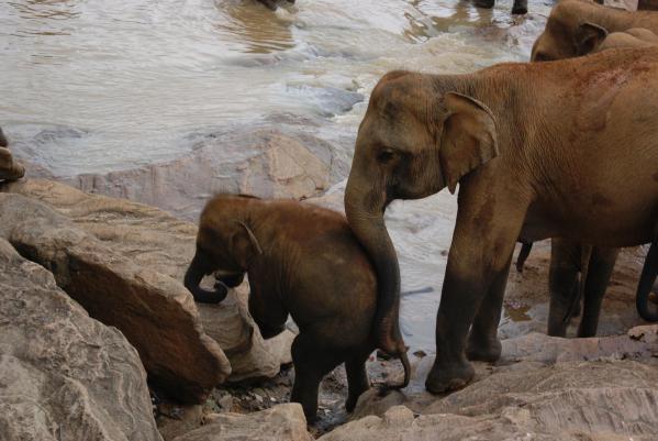 象の孤児院11