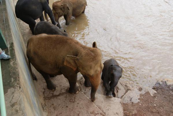 象の孤児院13