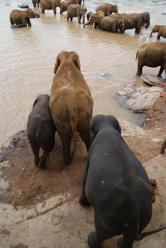 象の孤児院19