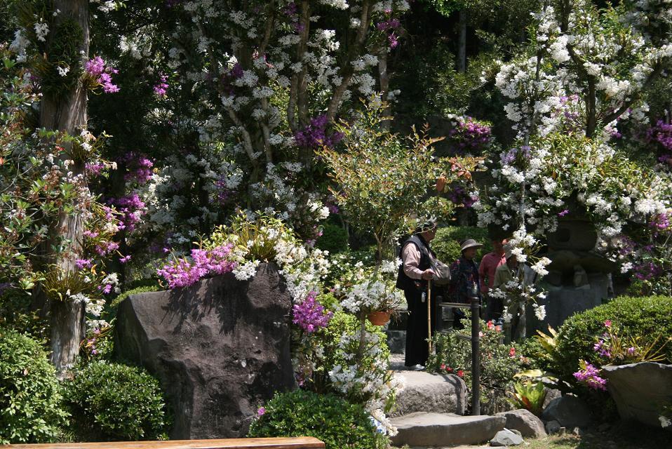 5月14日園内中心部の開花状況