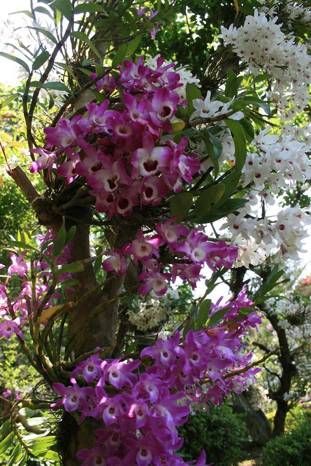 花の色彩の競演