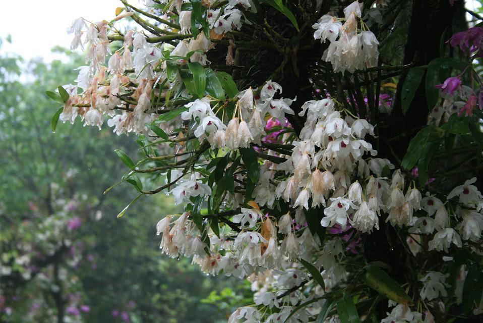 早咲きの白は・・・