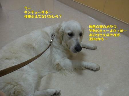 kyo-ken-1.jpg