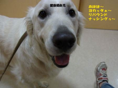 kyo-ken-2.jpg