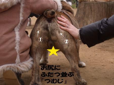 taisyo-4.jpg