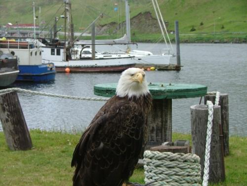 Bald+eagle-Dutch+Hrb_convert_20100916015150.jpg