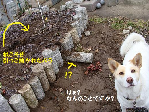 008nannokoto.jpg