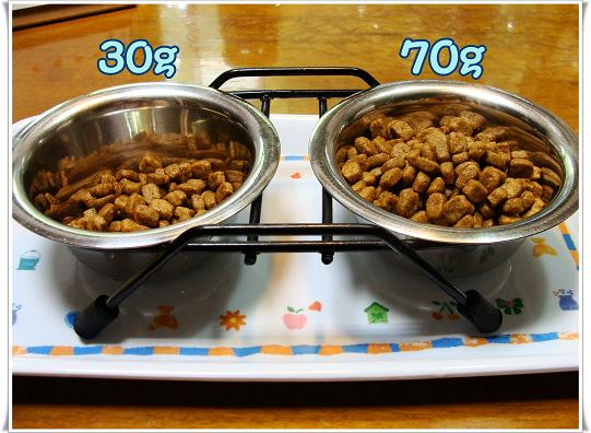 010DOGFOOD.jpg