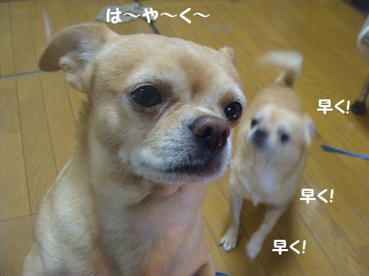 010hayaku.jpg