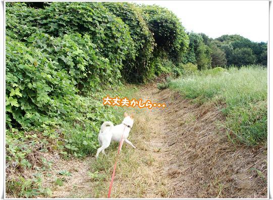 017daijoubu.jpg