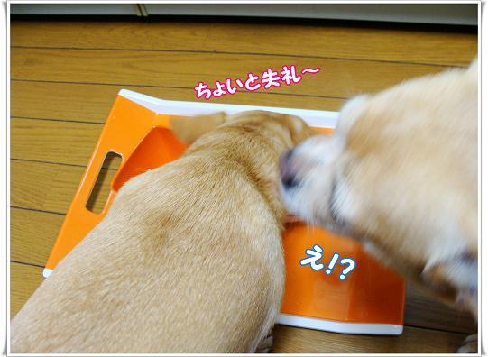 018TYOITO.jpg