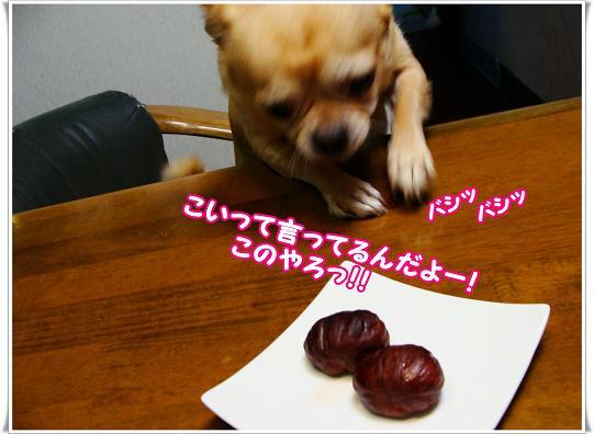 025konoyaro.jpg