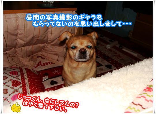 041HAYAKUNETE.jpg