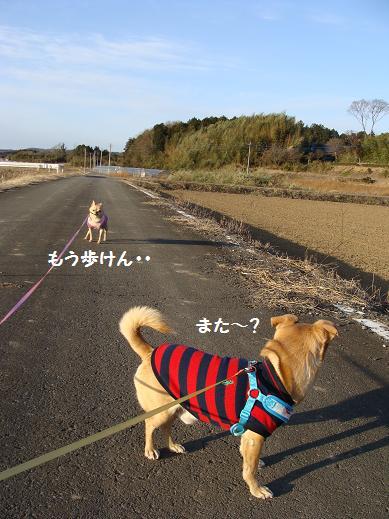 041aruken.jpg
