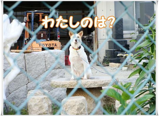 041watasinoha.jpg
