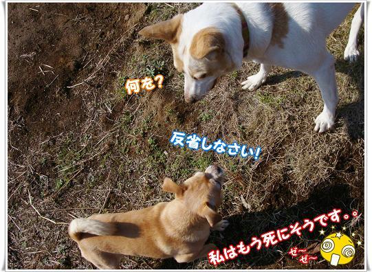 055HANSEISINASAI.jpg