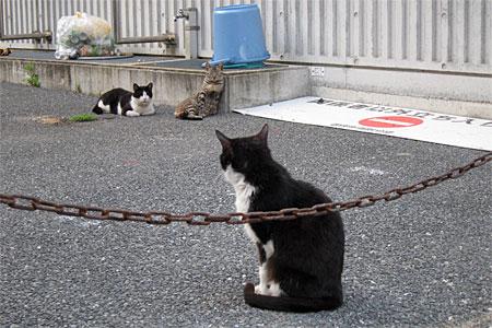 cat_kamigofuku01.jpg